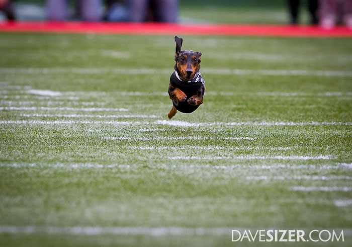 Flying wiener-dog.