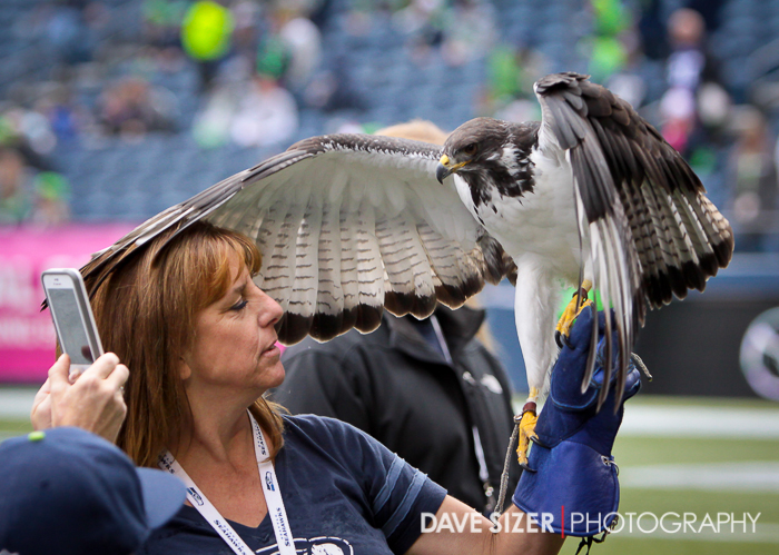 The Seahawk stretching it's wings before the game.