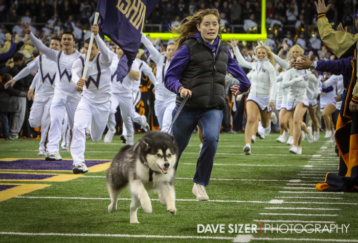 "Mascot ""Dubs"" brings the team out on the field."