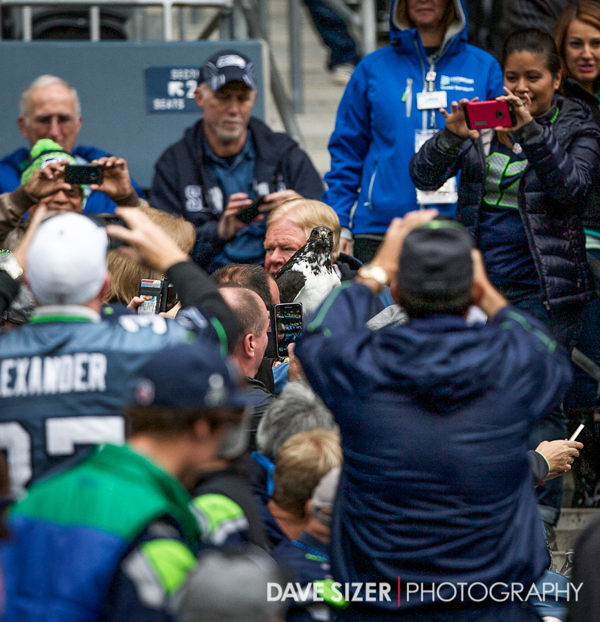 During the pregame, the Seahawk mascot Taima decided to go hang out with the fans.