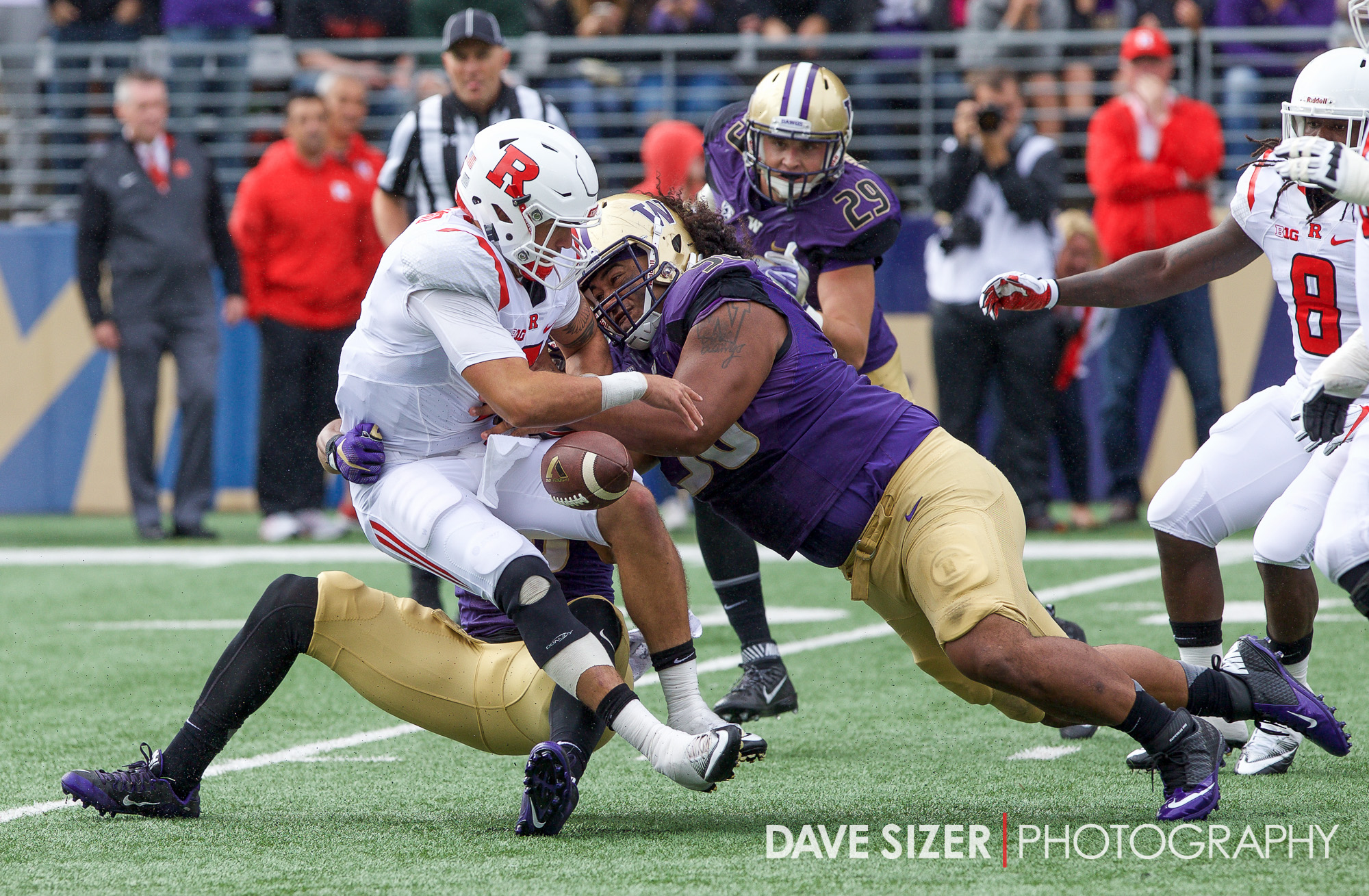 UW's Vita Vea hits Chris Laviano and forces a fumble.